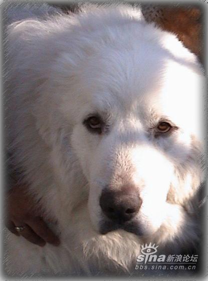 最帅的狗狗_银座的帅狗狗