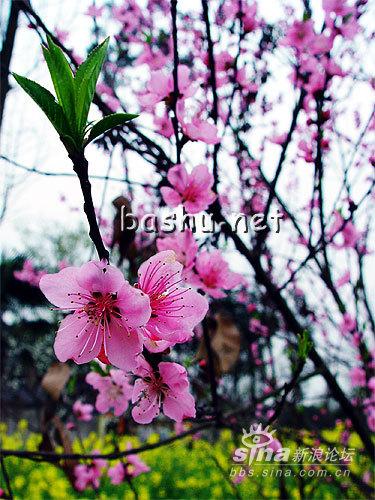 花儿为什么这么美?