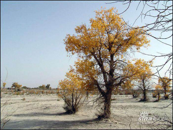 而在塔里木盆地边缘的维/吾/尔人中流传的这样一