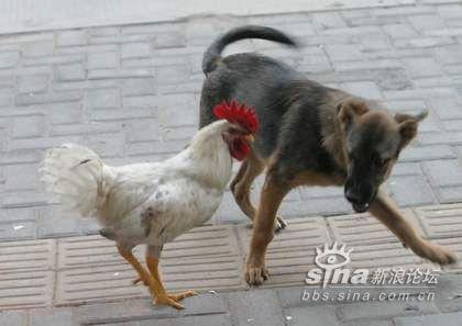 动物正面跑步分解图