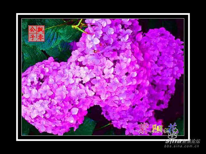 水彩画教程步骤图片 花球