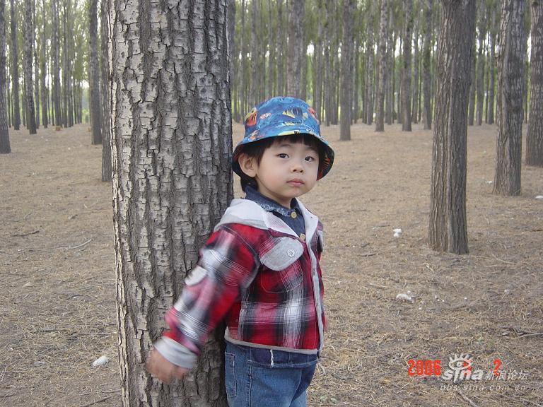 村玩了两天,好开心,今天才把照片上来 泓月在森林公园里图片