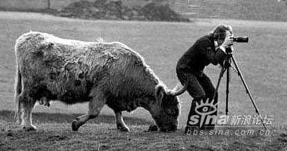 摄影师与野牛
