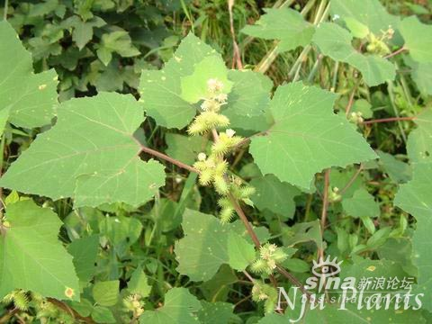 诗经里的植物,片叶间都闪着不泯的素朴的光芒,涉过千年河水,依然清露