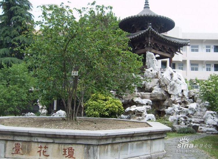 殿前植有两棵银杏树
