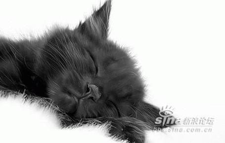 小动物的睡觉怪异的表情