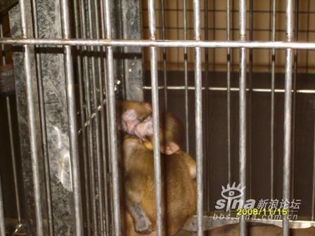 广州长隆动物园一日游