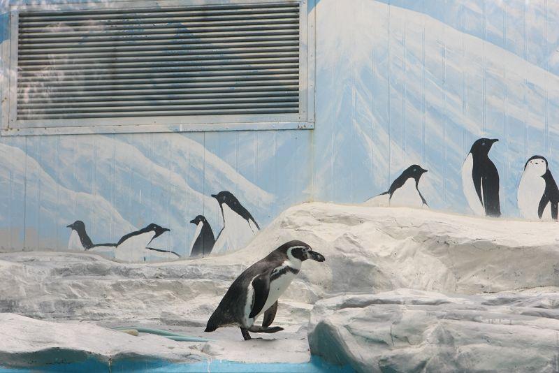 20090208动物园企鹅馆