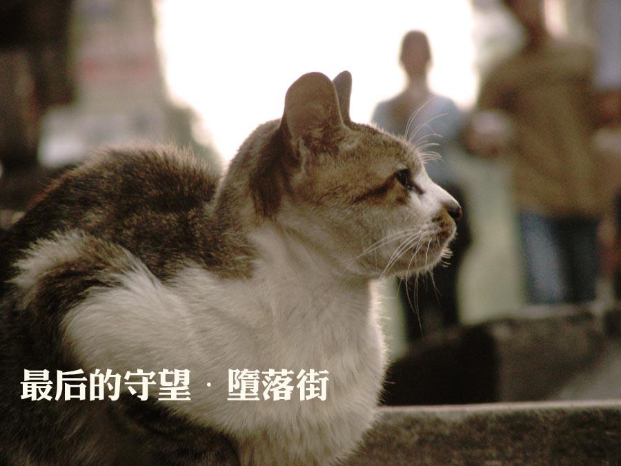 堕落街/最后的守望——堕落街的猫