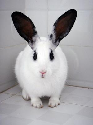兔子让出半个马桶动图