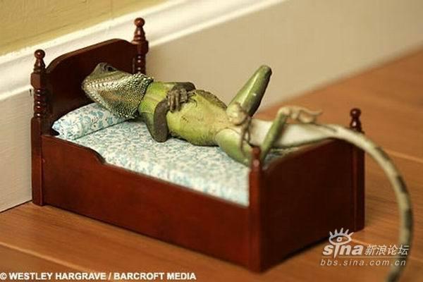 超级可爱:蜥蜴的pose
