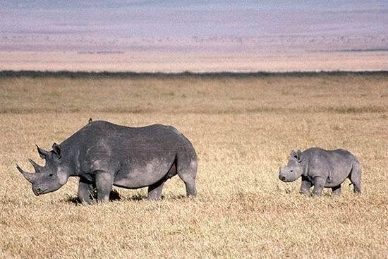 未来十年即将灭绝的动物