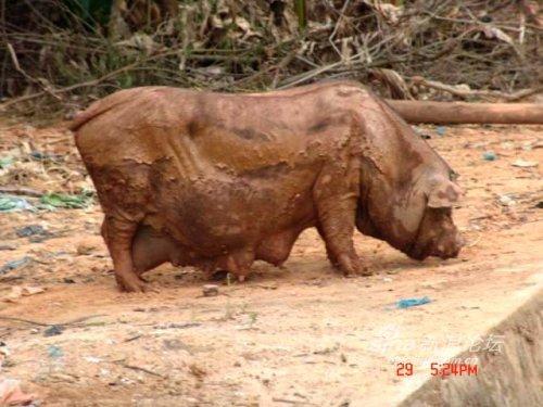 老母猪一套又一套表情包分享展示图片