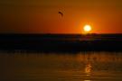 《居延海的晨曦》