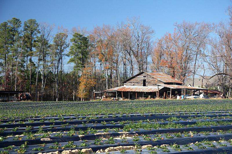 美国郊外小农场风光(2)