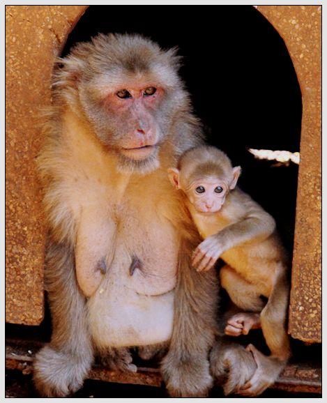 所有小猴子的动物图片