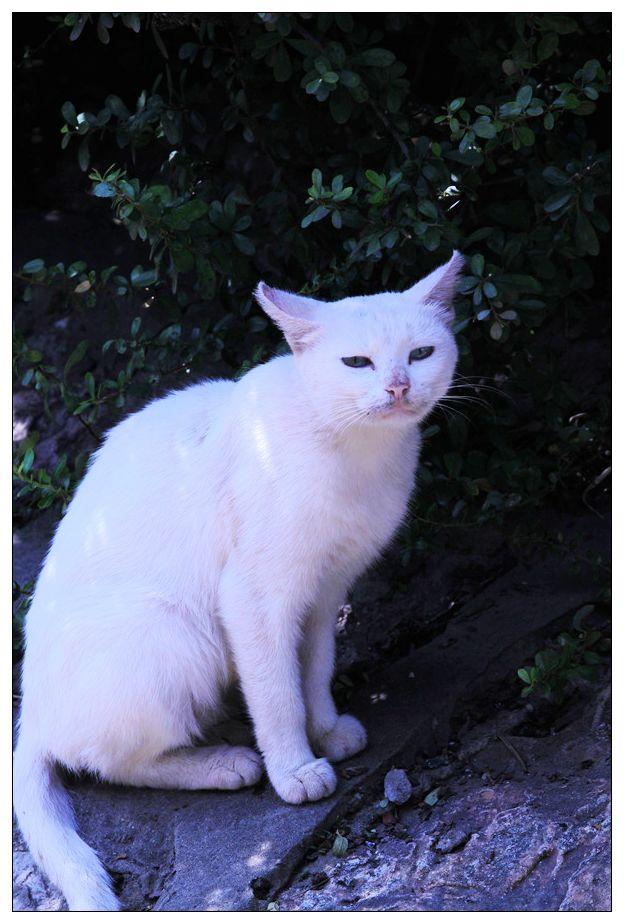 白貓風景圖片 正方形