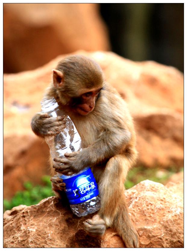 玩矿泉水瓶的小猴_美食/宠物